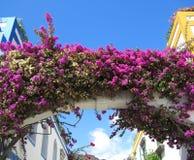 Flores do Bougainvillea fotos de stock royalty free