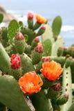 Flores do cacto em Spain imagem de stock