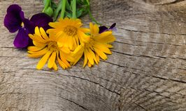 Flores do calendula e das violetas com uma haste em uma placa de madeira com quebras Imagem de Stock