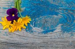 Flores do calendula e violetas frescas sobre uma placa de madeira Fotografia de Stock