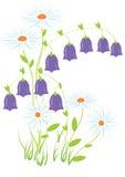 Flores do campo Ilustração Stock
