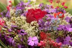 Flores do campo Imagem de Stock
