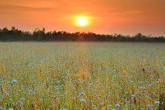 Flores do campo foto de stock royalty free