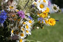 Flores do campo Imagens de Stock