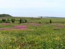 Flores do campo, azaléia Imagem de Stock