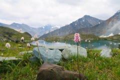 Flores do campo da montanha no fundo das montanhas e do lago imagens de stock