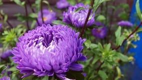 Flores do campo e do jardim foto de stock