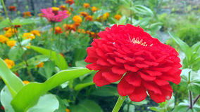 Flores do campo e do jardim fotos de stock royalty free