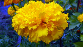 Flores do campo e do jardim Fotos de Stock