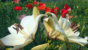 Flores do campo e do jardim Imagens de Stock Royalty Free