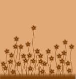 Flores do caramelo Fotos de Stock Royalty Free