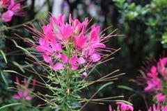 Flores do Central Park fotografia de stock