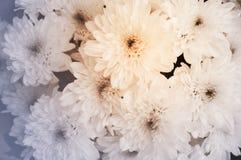 Flores do close up com a cor macia do foco filtrada Foto de Stock Royalty Free