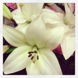 Flores do coração Foto de Stock