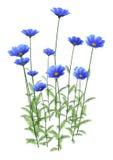flores do cosmos da rendição 3D no branco ilustração stock