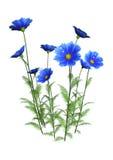 flores do cosmos da rendição 3D no branco ilustração royalty free