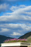 Flores do cosmos nas montanhas imagens de stock