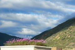 Flores do cosmos nas montanhas foto de stock royalty free