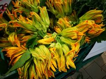 Flores do Courgette Foto de Stock Royalty Free