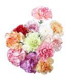 Flores do cravo imagens de stock royalty free
