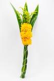 Flores do cravo-de-defunto para adorado , em Tailândia Foto de Stock
