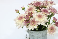 Flores do crisântemo Fotografia de Stock Royalty Free