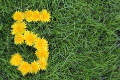 Flores do dente-de-leão em uma forma de uns cinco fotos de stock