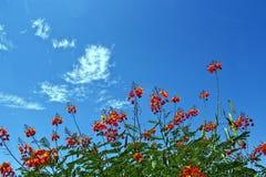 Flores do deserto Foto de Stock