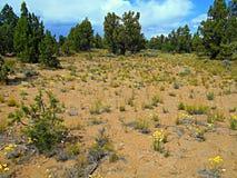 Flores do deserto Imagens de Stock