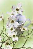 Flores do Dogwood Fotografia de Stock