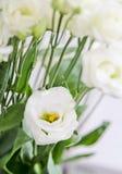 Flores do Eustoma Foto de Stock Royalty Free