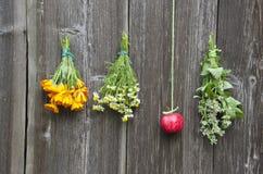 Flores do fitoterapia e maçã vermelha na parede Foto de Stock Royalty Free
