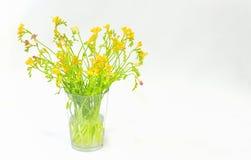 Flores do Freesia isoladas Fotografia de Stock