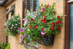 Flores do fundamento do verão em uma cesta fixada na parede. Imagens de Stock Royalty Free