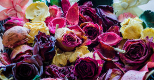 Flores do fundo Imagens de Stock Royalty Free
