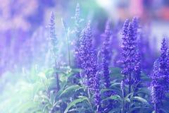 Flores do fundo da natureza do vintage feitas com filtros de cor Foto de Stock