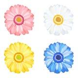 Flores do Gerbera da margarida ilustração royalty free