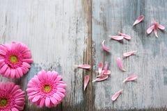 Flores do Gerbera no vintage cinzento planks_001 Imagens de Stock Royalty Free