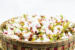 Flores do Guttiferae na cesta de bambu Imagem de Stock