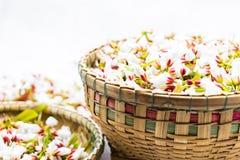 Flores do Guttiferae na cesta de bambu Fotografia de Stock Royalty Free