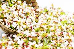 Flores do Guttiferae na cesta de bambu Fotos de Stock Royalty Free