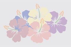 Flores do hibiscus Foto de Stock Royalty Free