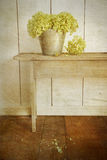 Flores do Hydrangea com olhar do vintage da idade Imagens de Stock Royalty Free