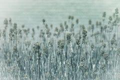 Flores do inverno Fotos de Stock