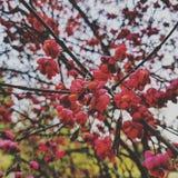 Flores do inverno Fotos de Stock Royalty Free