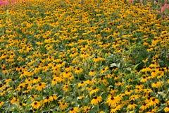 Flores do jardim imagens de stock royalty free
