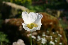 Flores do jardim imagens de stock