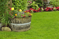 Flores do jardim Imagem de Stock Royalty Free