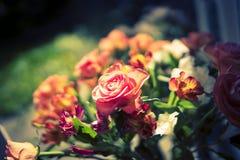 Flores 1 do jardim fotografia de stock