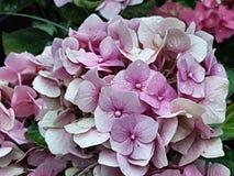 Flores do jardim Fotografia de Stock Royalty Free